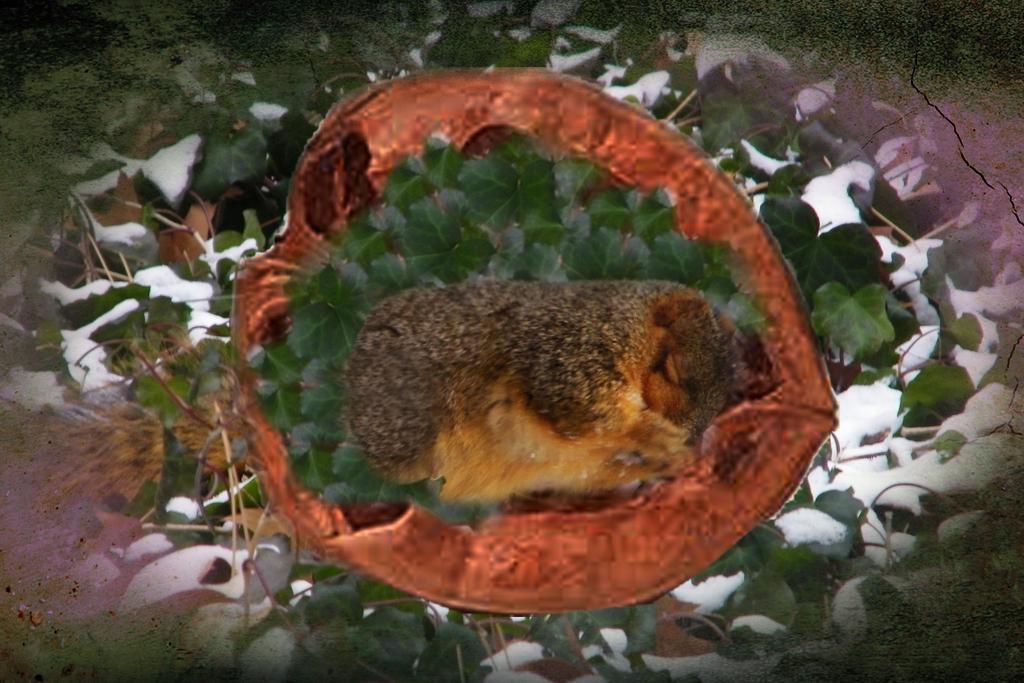 sleeping Squirrel by 3punkins