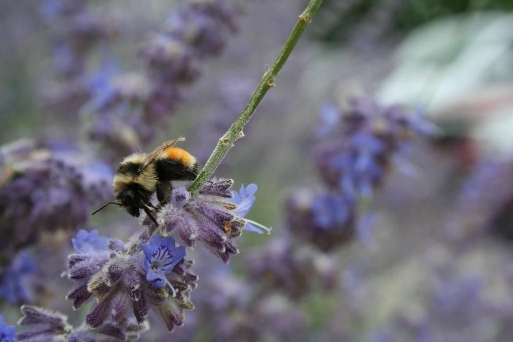 Worker Bee by entropy462