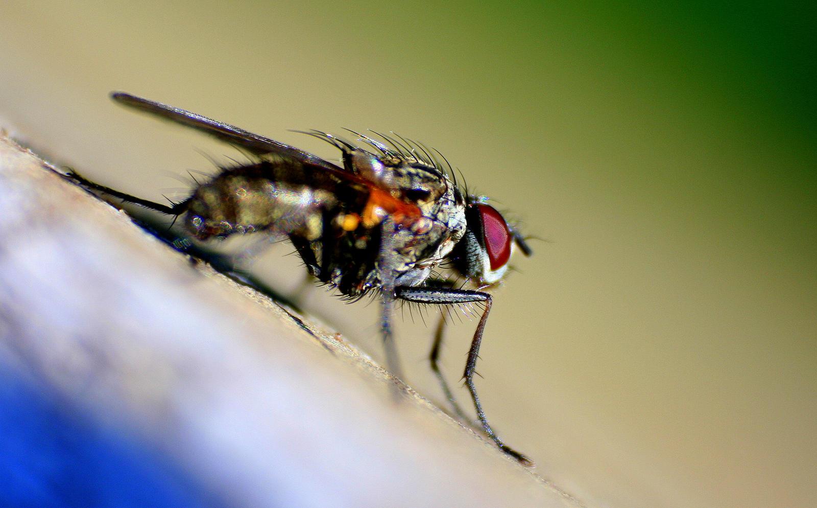 Fly by entropy462