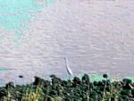Bird Resident Blur 2