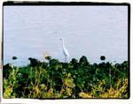 Bird Resident 3 Framed