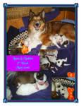 Luna Puppies Collage