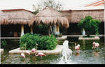 Flamingos at Paraiso del Mar