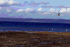 Dash Point Seagull 2 by infin8yquest