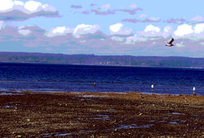 Dash Point Seagull 4 Poster by infin8yquest