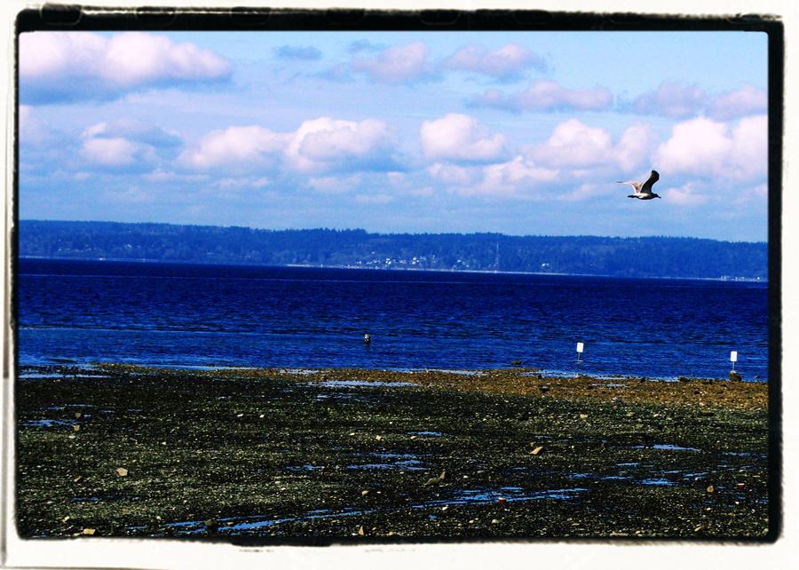 Dash Point Seagull 10