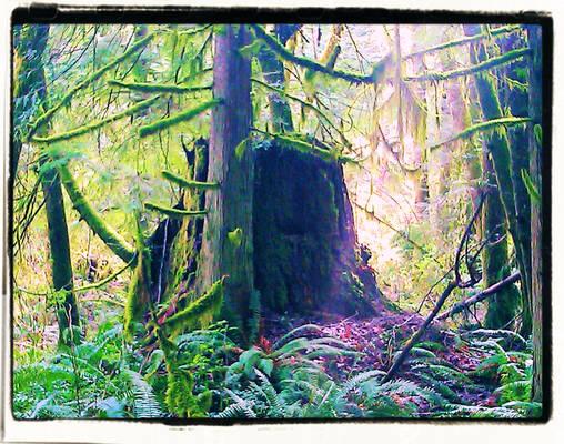 Ascension Creek Spring