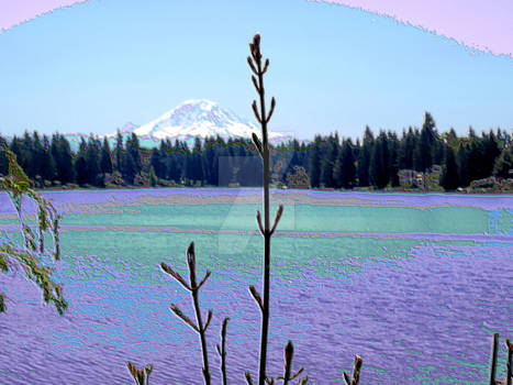 Lake Morton Shore 1