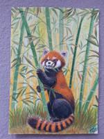 A Red Panda by Pikabulbachu