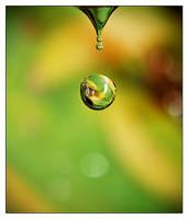 drop 40-spring