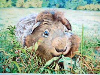 Guinea Pig by Jay--Dee