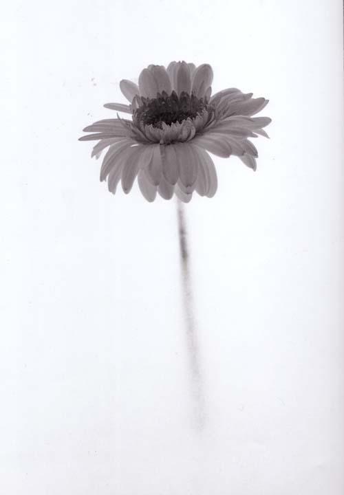 flower one by damienhirst12