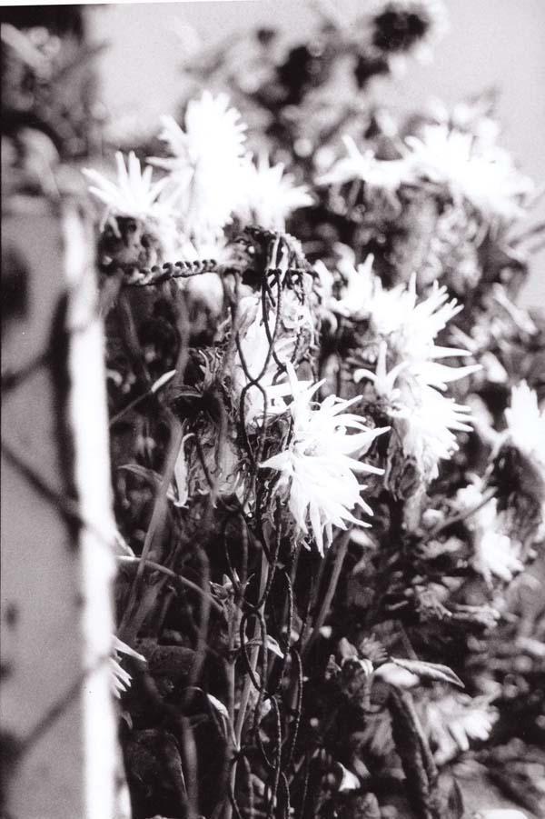 flower three by damienhirst12