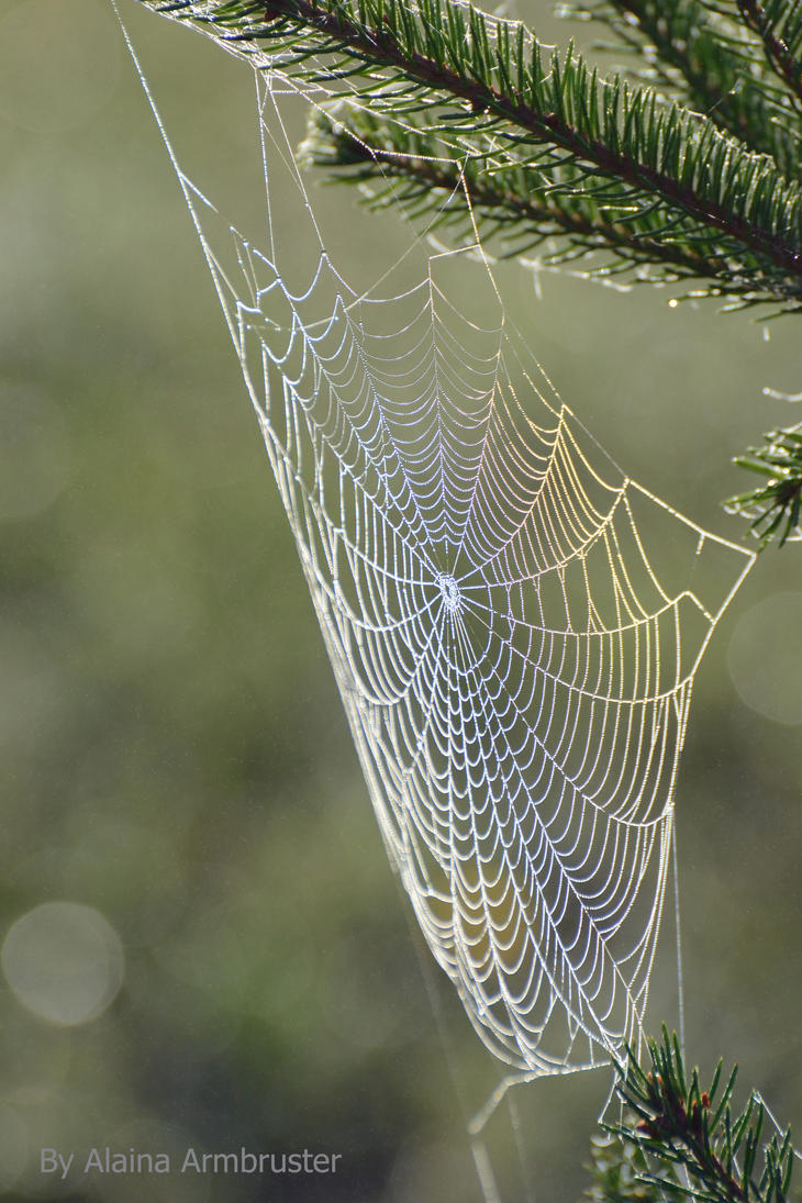 Spiderweb Rainbows by AlainaLee