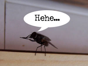 Devious Fly...