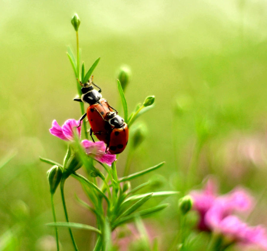 lady bug luv