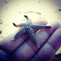 Sea Star friend