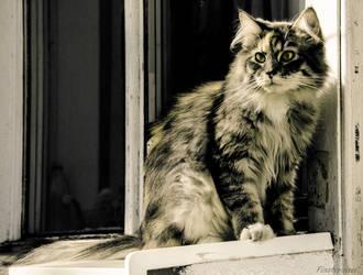 Mimi - my cat by Finsternisss
