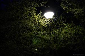 Week 16 - light in the dark