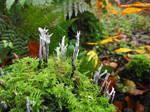 Coral Fungus by DanaVarahi