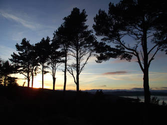 Sunset with pines. by DanaVarahi