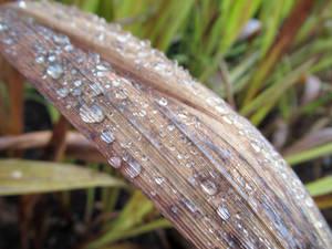 Leaf and rain drops