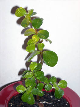 Hara-feb-2