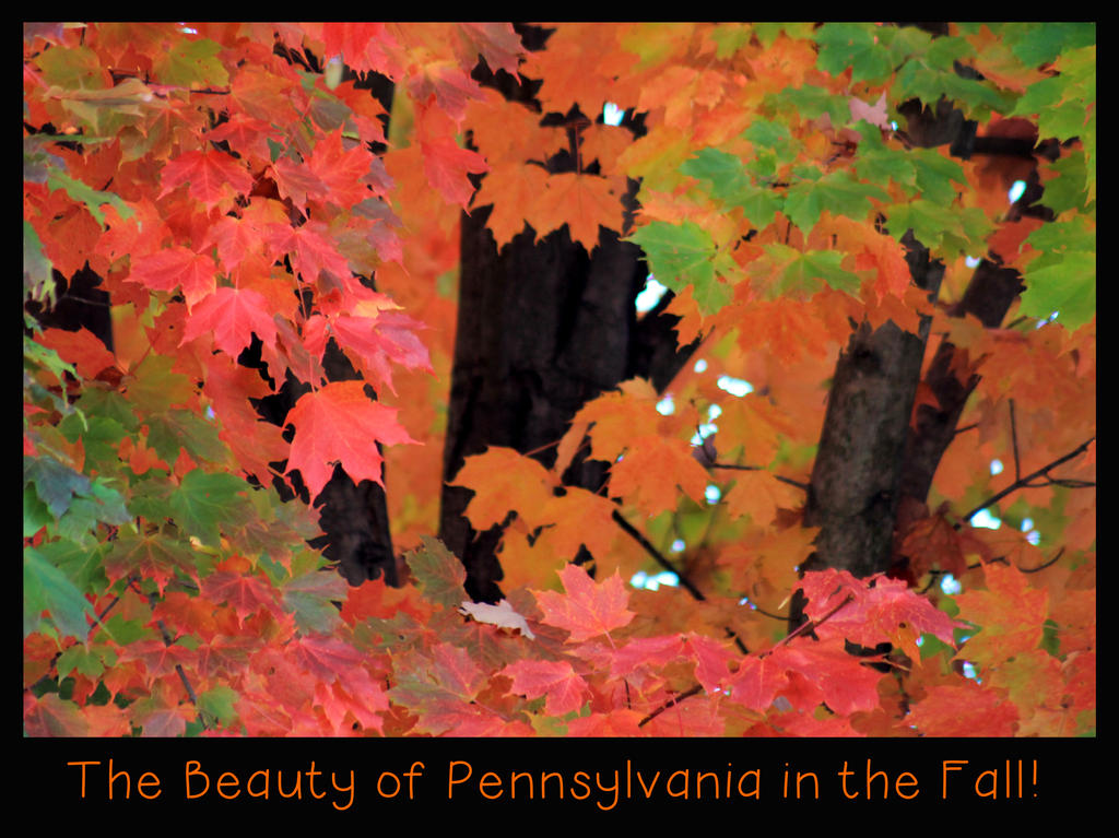 The Beauty of Pennsylvania in the Fall by OrioNebula