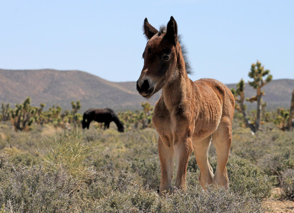 Newborn Wild Horse by I-Heart-Photos