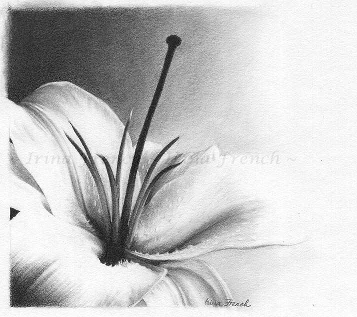 White Lily by Ameryn