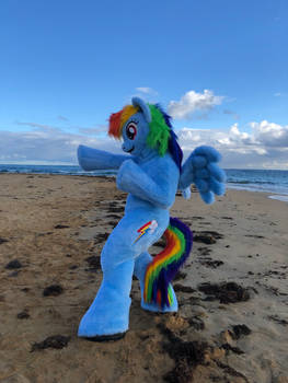 rainbow dash hanging out at the beach