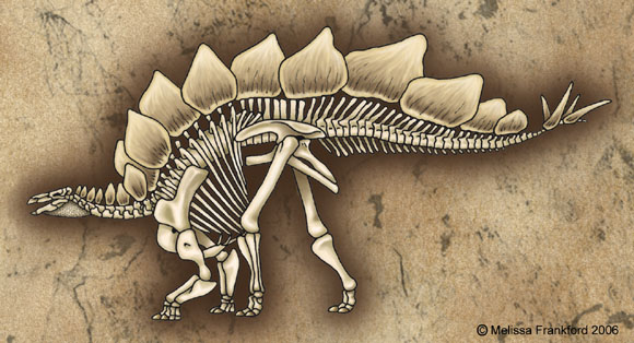 Stegosaurus Skeleton by mmfrankford