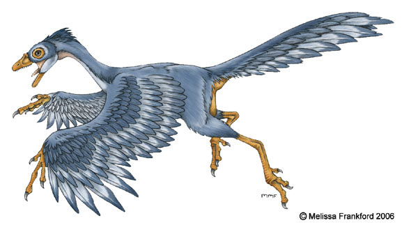 Archaeopteryx Concept
