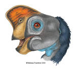 Oviraptor Head Study
