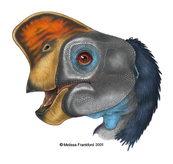 [Image: Oviraptor_Head_Study_by_mmfrankford.jpg]