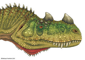 Ceratosaurus Head Study by mmfrankford