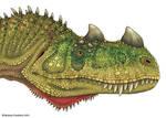 Ceratosaurus Head Study