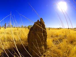 Termite Mound by mohsinanwar