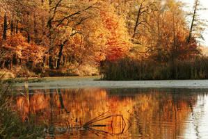 Autumn .. by mohsinanwar