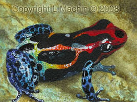 Poison Dart Frog1 by PickledPixie