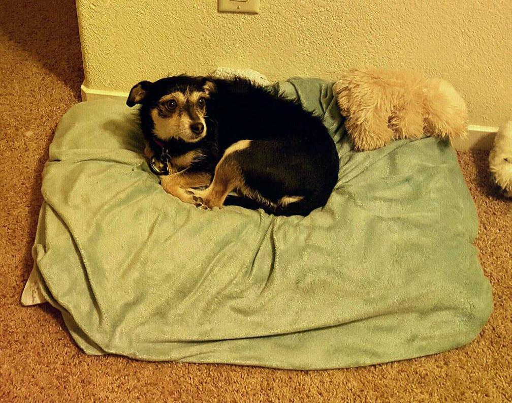 Lolli's comfy spot. by AshaleyFaye
