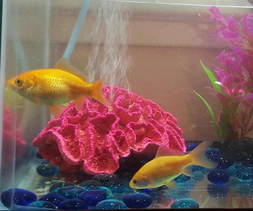 April 2016 Fish Tank  by AshaleyFaye