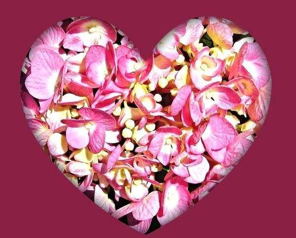 Flowered Heart by Lust0fADeeperPain