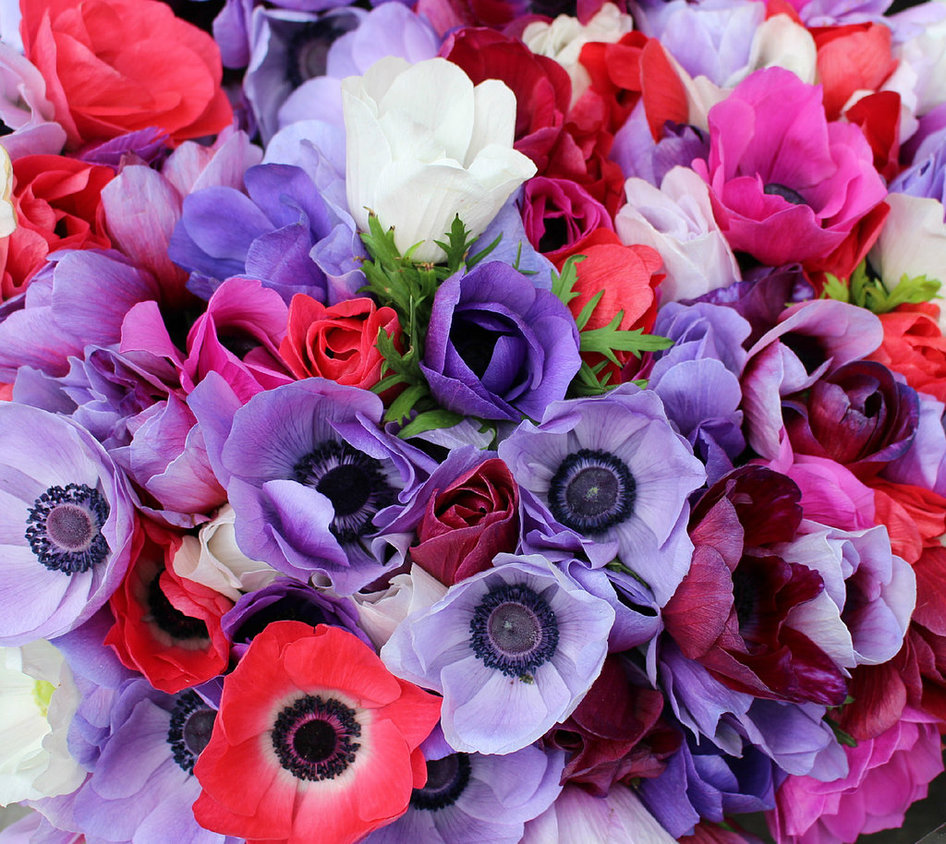 Anemones by Lust0fADeeperPain