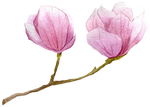 68152974-spring-background-with-watercolor-branch- by Doll-Ladi