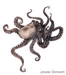 Octopus Graphite Drawing *Updated*