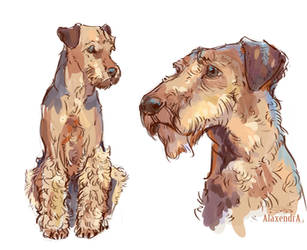 Airedale Terrier by AlaxendrA