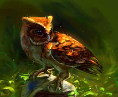 Owl and sun