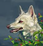 White she-wolf