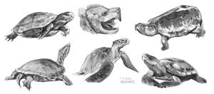 Sketches of turtles